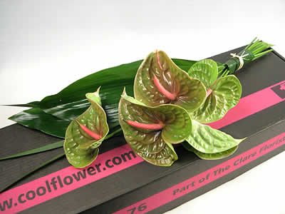 Contemporary Anthuriums