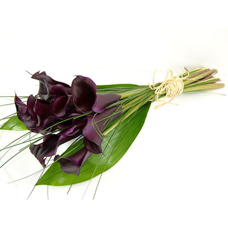 Black Magic Calla Lilies