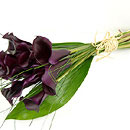 Black Magic Calla Lilies – fresh flowers for UK delivery by post – bouquets and arrangements from Clare Florist