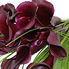Stunning Black Magic Calla Lilies