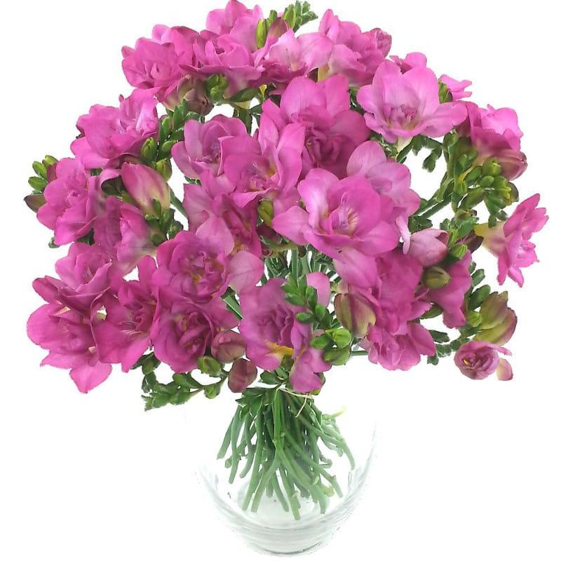 Irresistible Cerise Freesia Bouquet