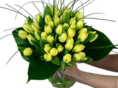 50 Lemon Tulips