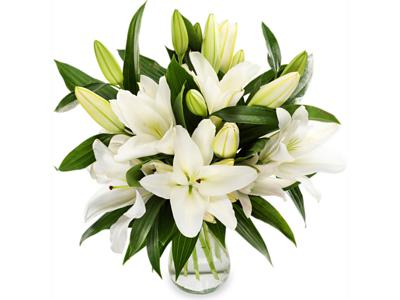 Classic Lilies half price special offer on subscriptions.