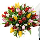 50 Mixed Tulips – fresh flowers for UK delivery by post – bouquets and arrangements from Clare Florist