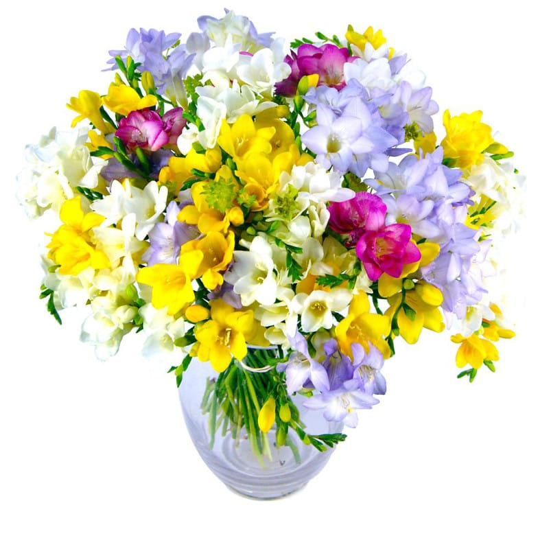 Freesia fragrance bouquet by clare florist