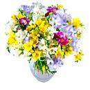 Freesia fragrance, a luxury arrangement of stems of Freesia flowers availlable for next day free delivery..