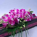 Valentine's Exotic Orchids – fresh flowers for UK delivery by post – bouquets and arrangements from Clare Florist