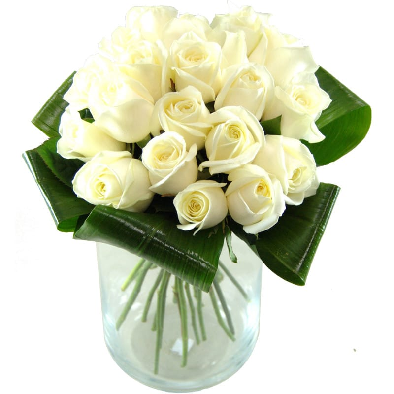 Innocence white roses fresh flower bouquet 20 premium white roses innocence white roses mightylinksfo Image collections