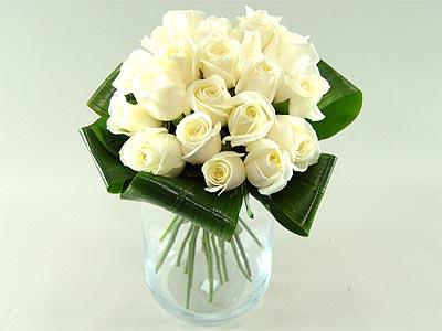 Innocence – white roses
