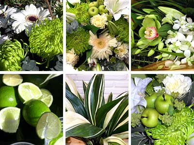 Lime Flower Collection