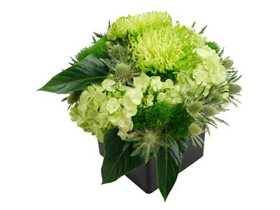 little greenie flower cube by clare florist