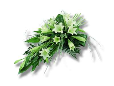 Longiflorum Lilies half price special offer on subscriptions.