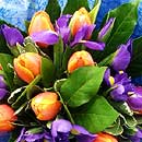 Mandarin Blues – fresh flowers for UK delivery by post – bouquets and arrangements from Clare Florist