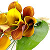 Mango Calla Lilies - Rich in colour, they are sure get attention!