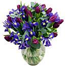 Midnight Iris product image