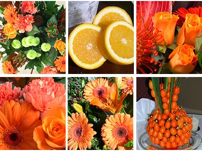 Orange Flower Collection
