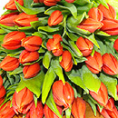 20 Orange Tulips – fresh flowers for UK delivery by post – bouquets and arrangements from Clare Florist