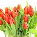 20 Orange Tulips