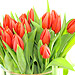 Delightfully simple, 20 Orange Tulips - Freshly picked and simply presented.