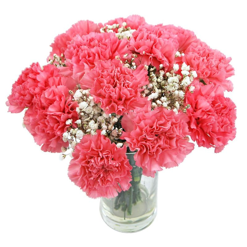 pink carnations by clare florist
