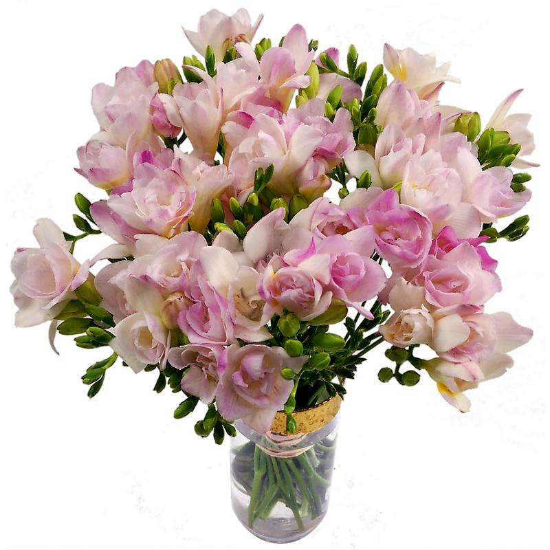 40 pink freesia fresh flowers 20 stems of pink freesia by florists 40 pink freesia mightylinksfo