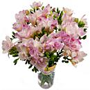 Pink Freesia – fresh flowers for UK delivery by post – bouquets and arrangements from Clare Florist