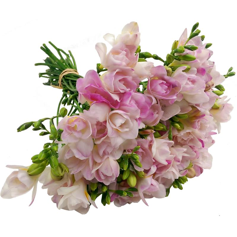40 pink freesia fresh flowers 20 stems of pink freesia by florists 40 pink freesia fresh flowers 20 stems of pink freesia by florists delivered mightylinksfo
