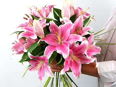 Lily Flower Picture on Sensation Lilies    Flowers Online   Janes Flower Shop