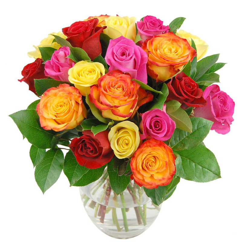 rainbow roses by clare florist