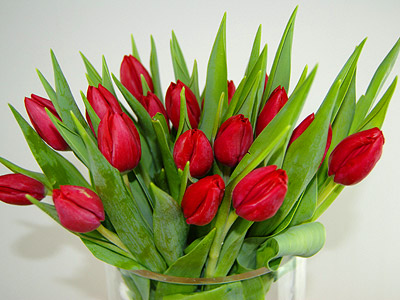 Image of 20 Red Tulips