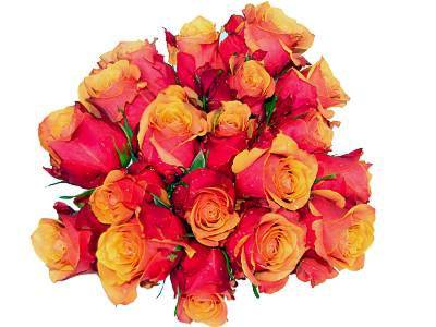 20 Orange Roses