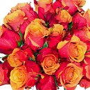 20 Orange Roses – fresh flowers for UK delivery by post – bouquets and arrangements from Clare Florist
