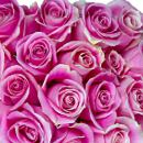 20 Pink Roses – fresh flowers for UK delivery by post – bouquets and arrangements from Clare Florist