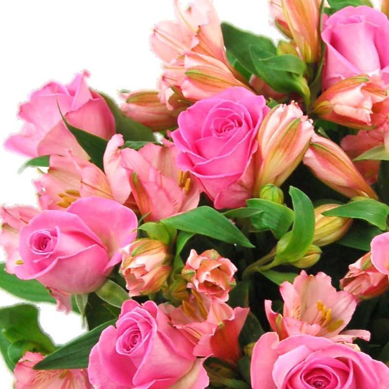 Pink Rosmeria