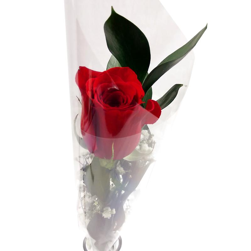 Single red rose deluxe gift set fresh flowers free delivery negle Choice Image