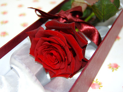 Single Red Rose and Chocolates