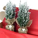 A wonderful pair of fresh Christmas conifer trees with snow effect