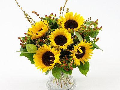 http://www.clareflorist.co.uk/flowers-by-type/helianthus/sunflower-surprise-40069