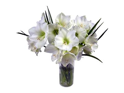 to celebrate a white christmas our mont blanc amaryllis is a beautiful snow inspired arrangement of flowers - White Christmas Flower Decorations