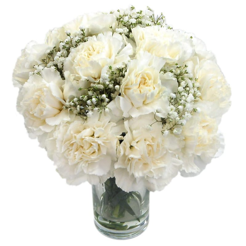 white carnations for delivery throughout the uk from clare florist