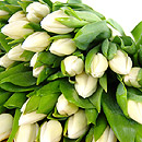 20 White Tulips – fresh flowers for UK delivery by post – bouquets and arrangements from Clare Florist