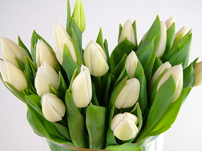 The secret meaning of flowers part 9 tulips clare florist blog the secret meaning of flowers part 9 tulips mightylinksfo