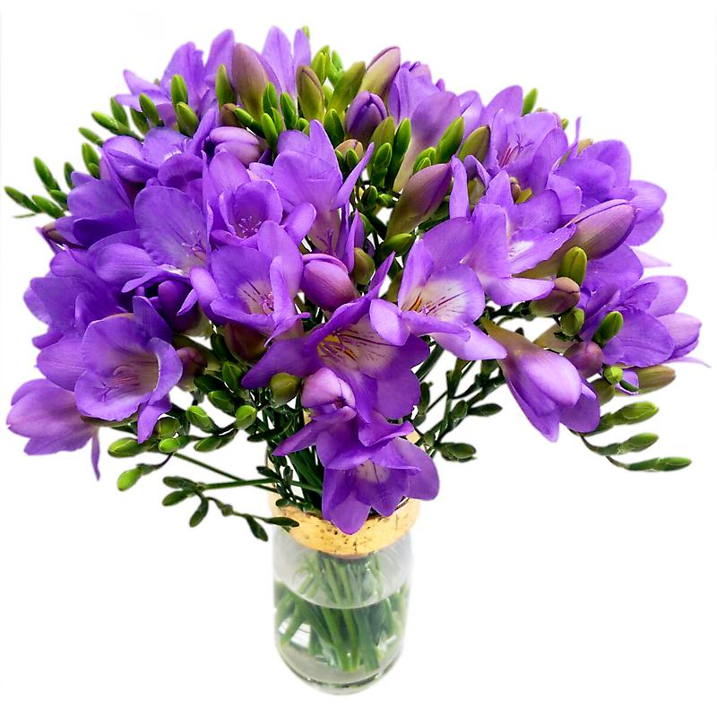 Purple Flower Delivery UK |Order & send online | Clare Florist