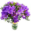 The Fabulously fresh and fragrant Purple Freesia.