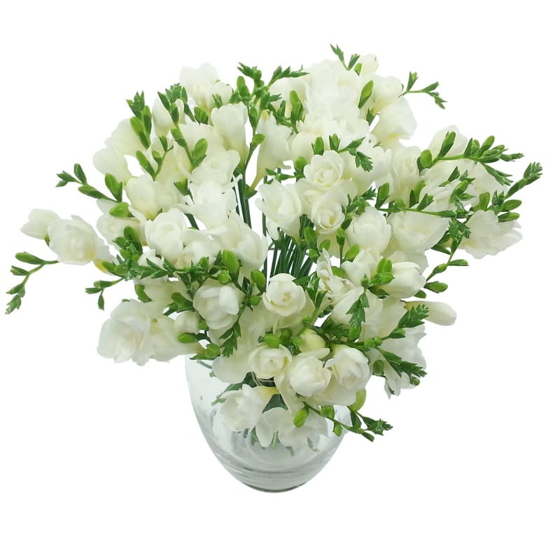 White Whispers Freesia Bouquet