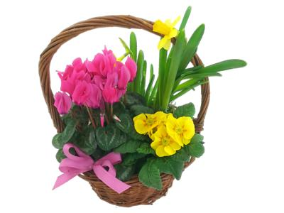 Colours of Spring Plant Basket