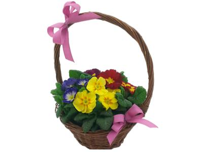 Pretty Primula Plant Basket