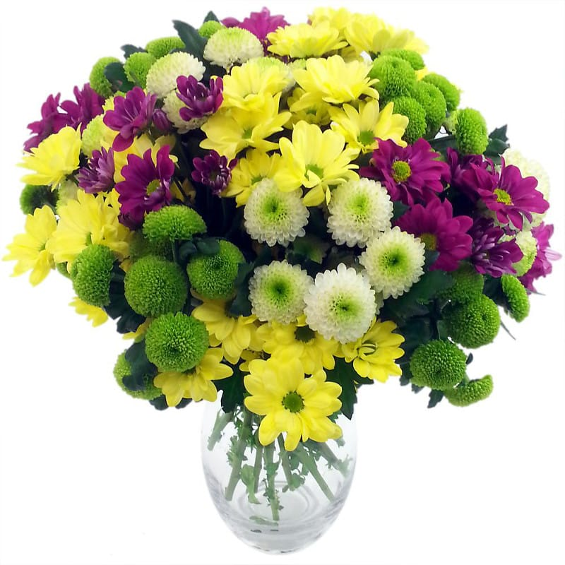 Chrysanthemum Craze!