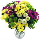 Go wild for the Chrysanthemum Craze Bouquet, an alluring arrangement of mixed chrysanthemum flowers