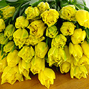 20 Yellow Tulips – fresh flowers for UK delivery by post – bouquets and arrangements from Clare Florist